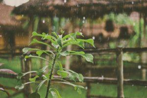 【湿気で髪がまとまらない!】梅雨で広がる髪のサラサラケアの裏技!
